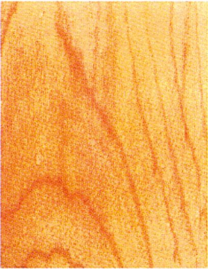 Holzlexikon Ahorn