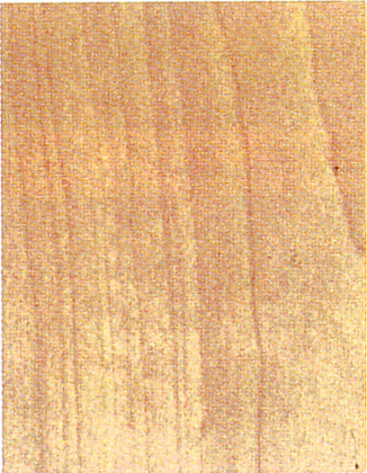 Holzlexikon Birke
