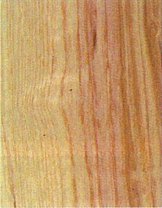 Holzlexikon Esche