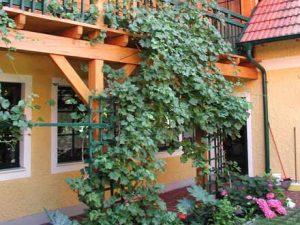 Pergolas, Balkonen, Rankhilfen Holzbau Niederösterreich