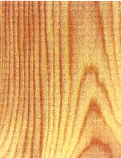 Holzlexikon Kiefer