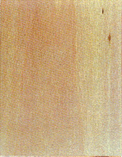 Holzlexikon Linde