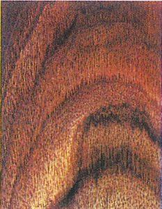 Holzlexikon Nussbaum