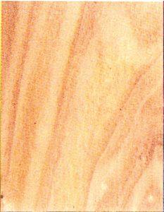 Holzlexikon Pappel