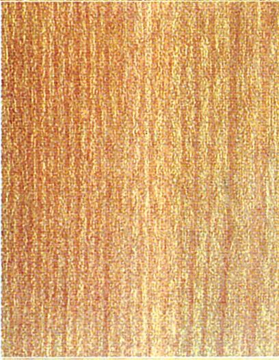 Holzlexikon Ulme